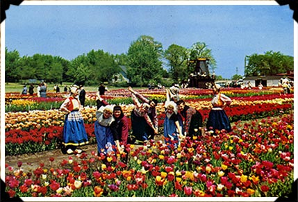 Tulips and Dutch dancing in Holland Michigan for 60 years