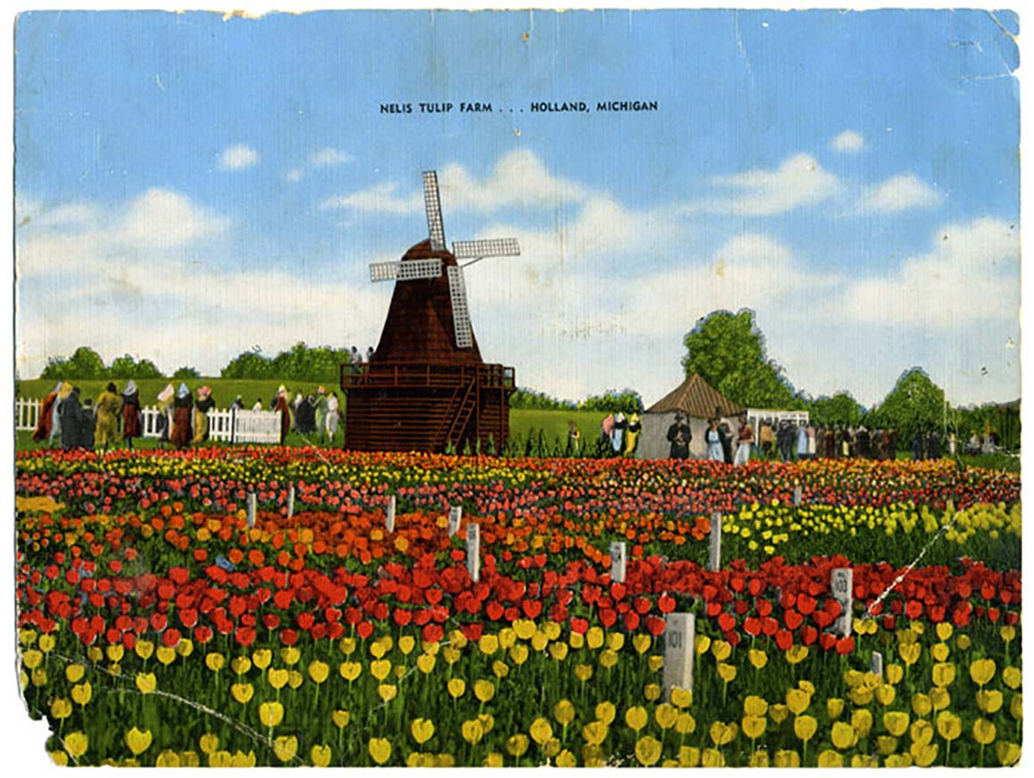 Nelis Tulip Farm Dutch Village