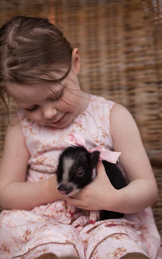 Dutch Village Holland Piglet at Petting Farm